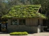 green-roof-in-bloom[1]